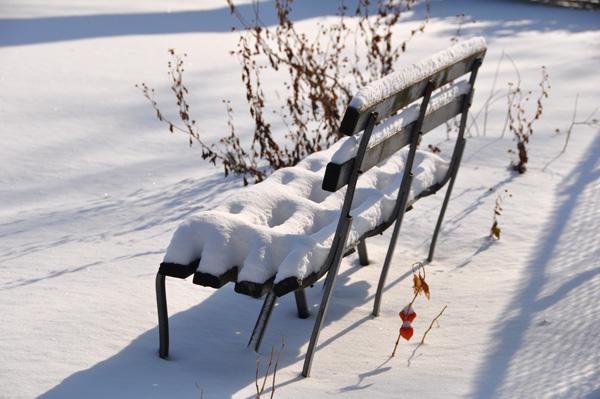 New York Snow Central Park 01/2010