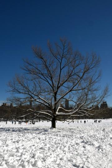 CentralPark_snowday_03