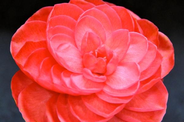 valentines_flower4
