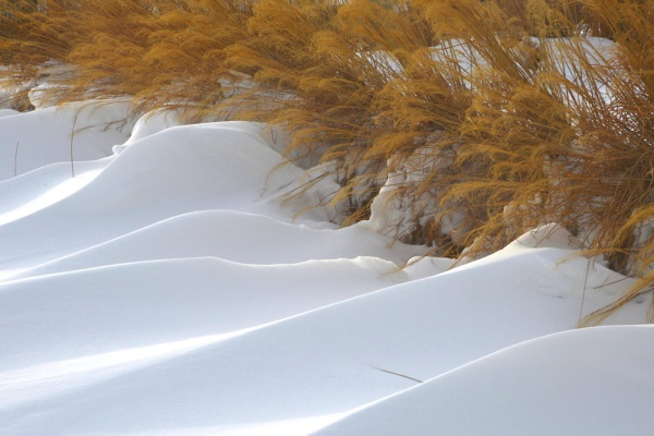 watermill_winter_grasses_snowbanks
