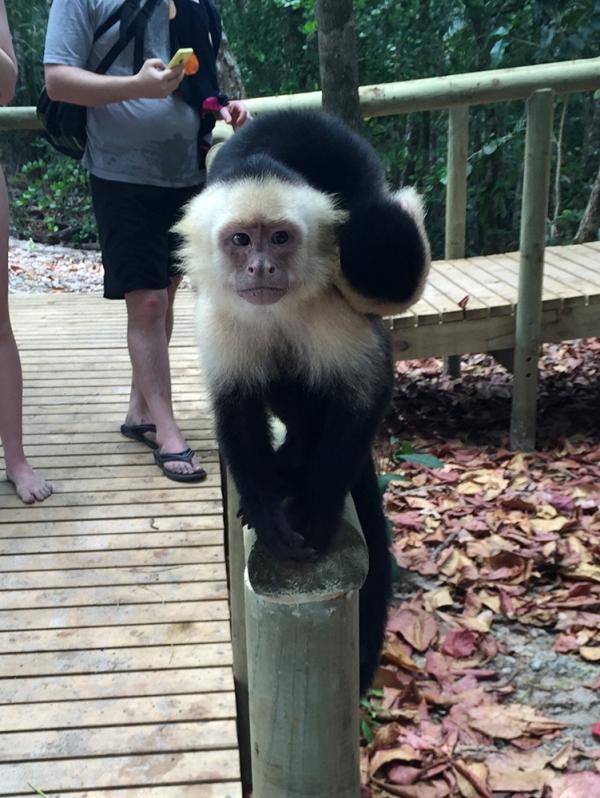 costa_rica_monkey_04