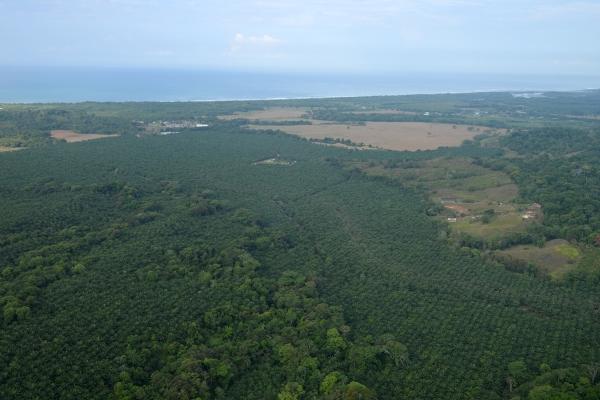 nature_air_costa_rica_sky_palm
